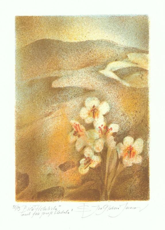 Štrbová Jarošová Iva - White Dove - Print