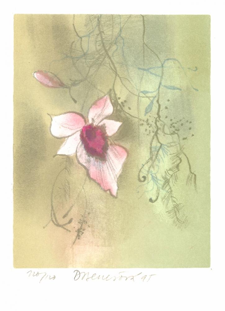 Benešová Daniela - Orchidea - Print