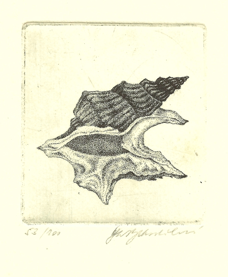 Vychodilová Olga - Mušle - Print